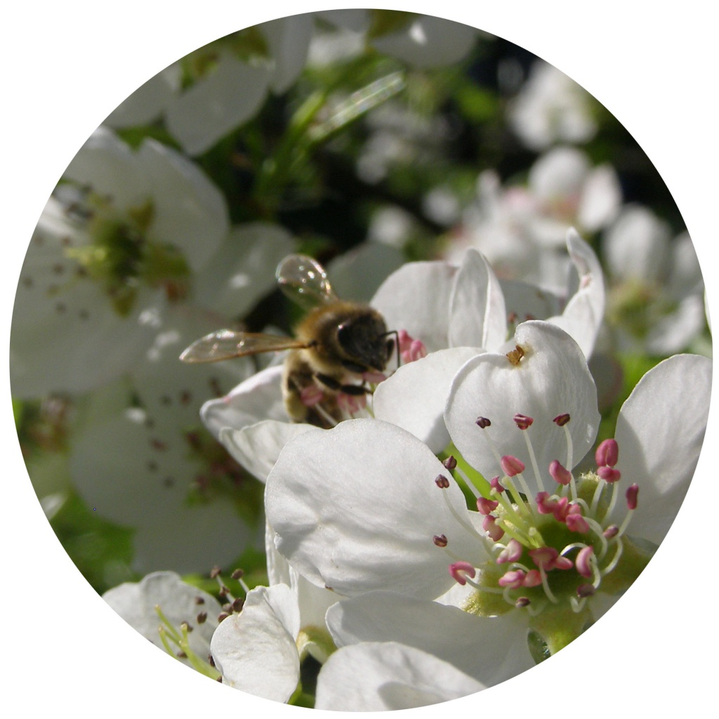 Bienen Vielfalt