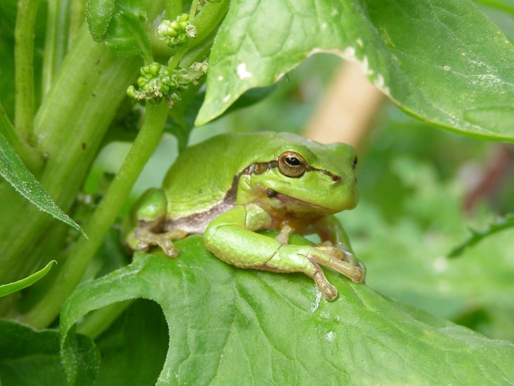 Amphibien ansiedeln und unterstützen