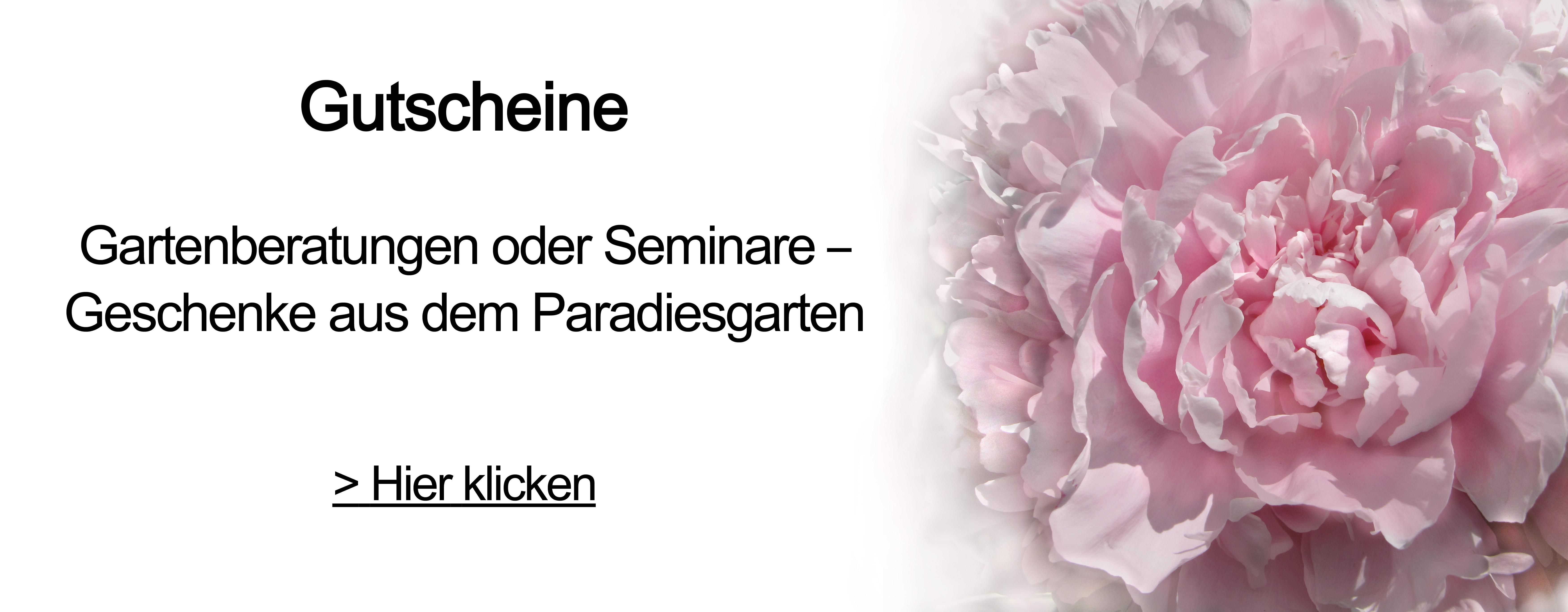 Seminar Gutschein