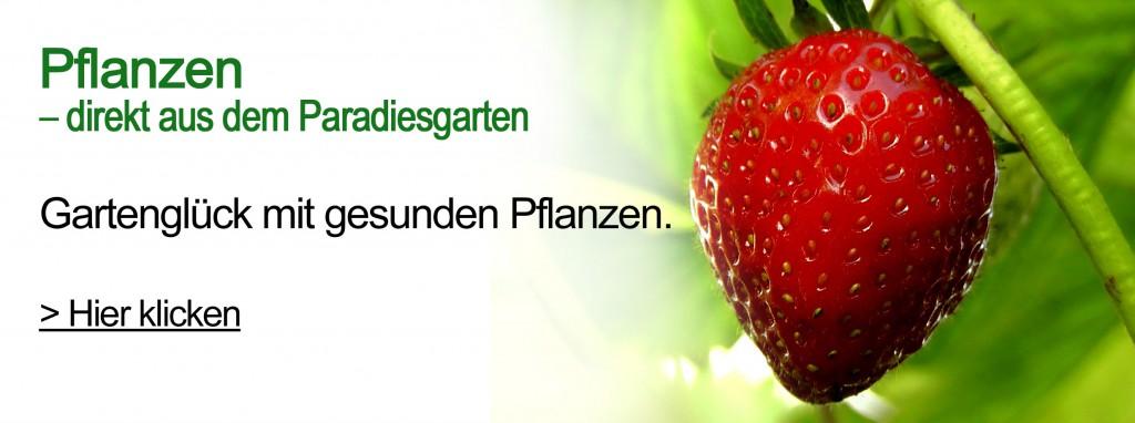 Paradiesgarten Maag, Pflanzen Shop