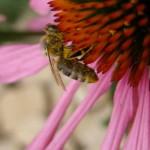 Bienenhaltung Kurs