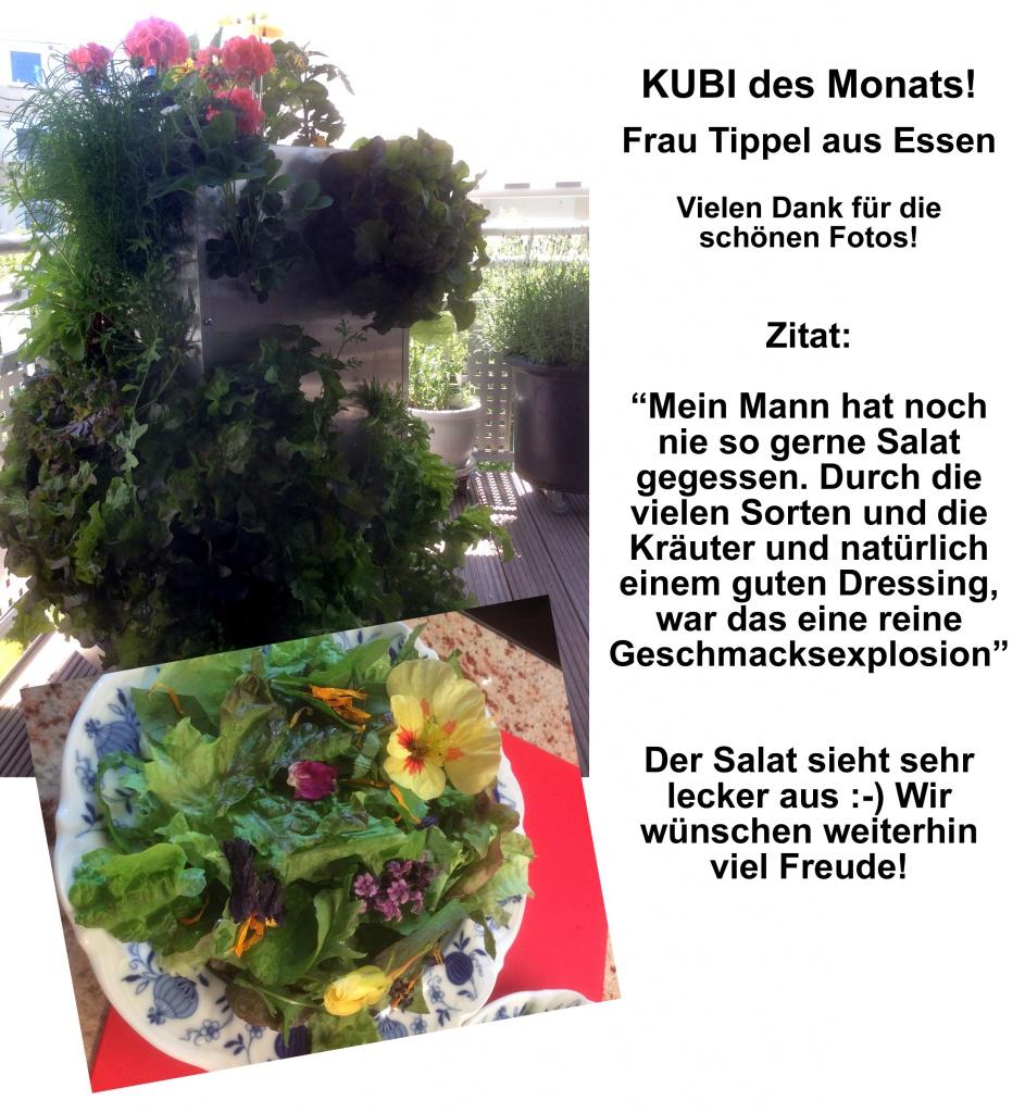 2015-08 KUBI des Monats Tippel Essen