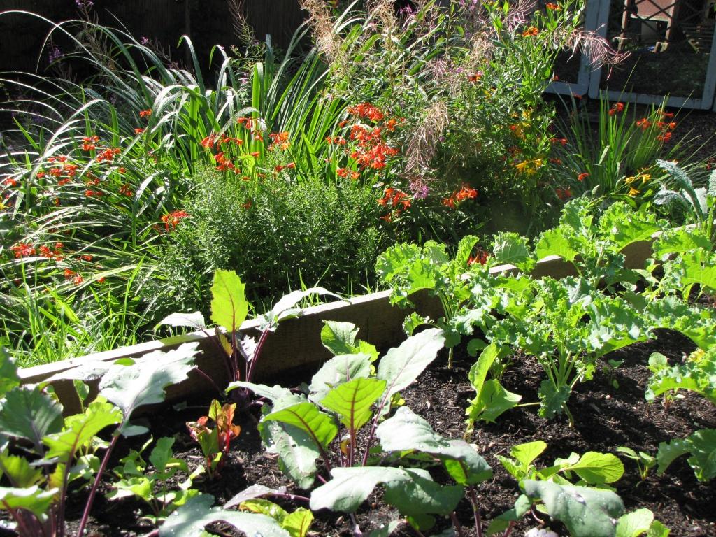 Mini Farming Kurs, Gemüse anbauen