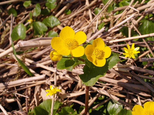 Blüten im Moor