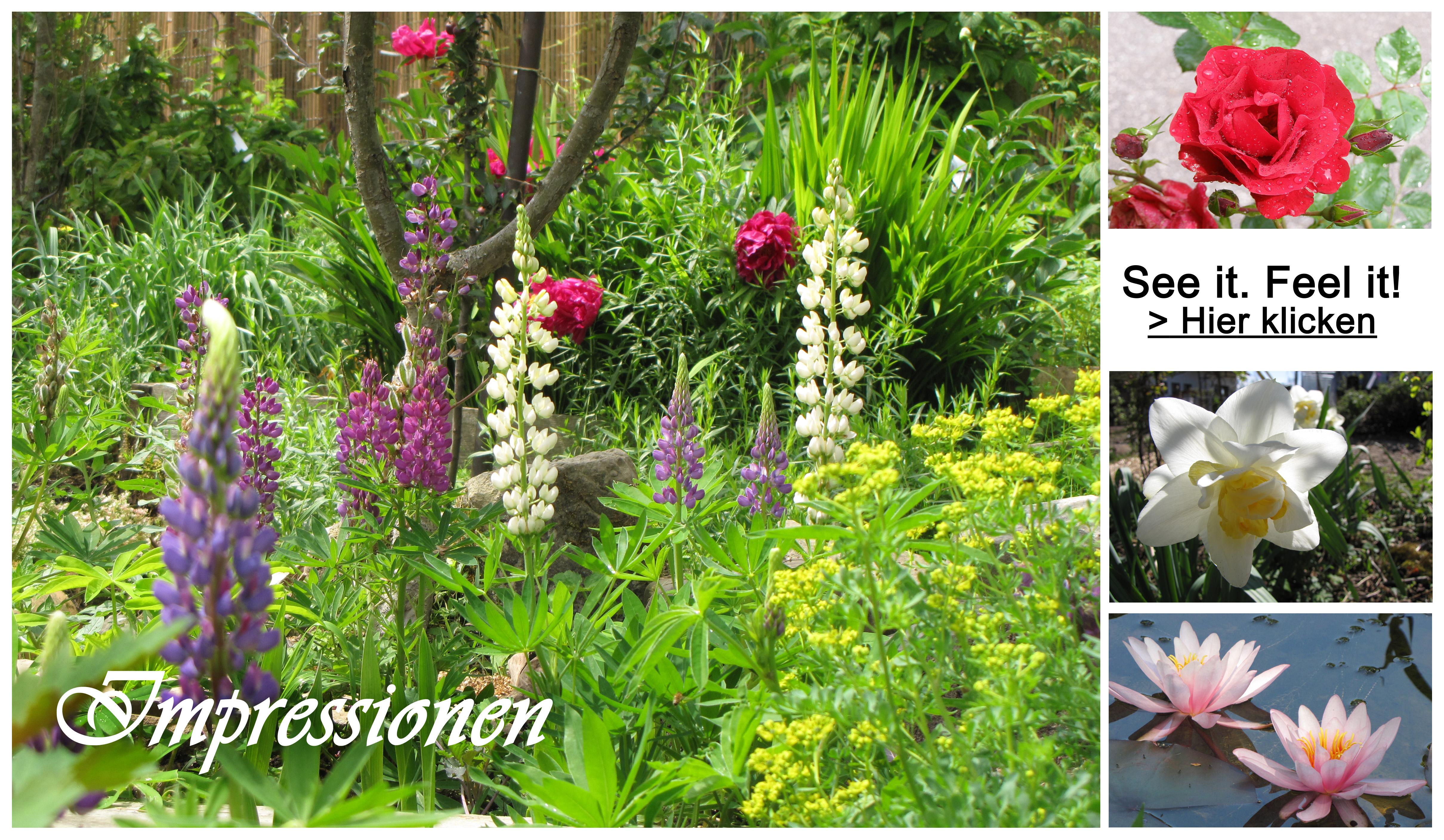 Blüte im Paradiesgarten Maag