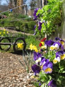 KUBI im Frühjahr - Vertikaler Anbau