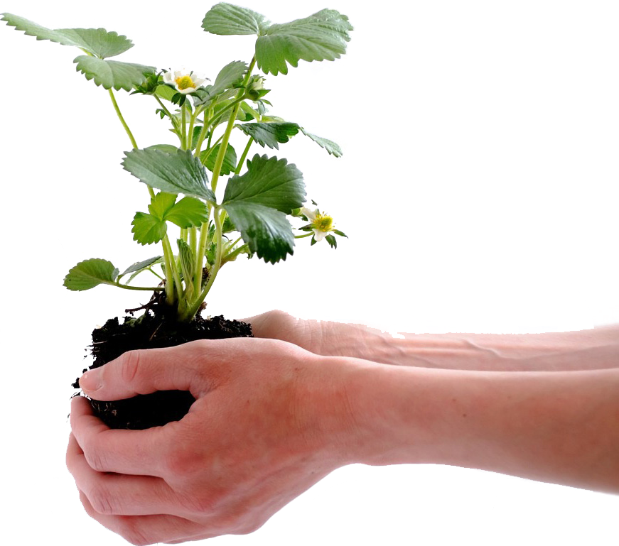 KUBI bepflanzen 3