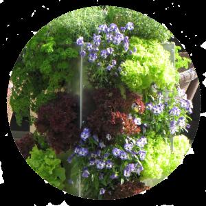 Kompostieren und Pflanzen gemeinsam