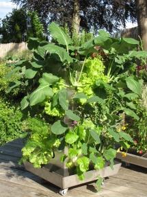 Biomeiler mit Pflanzen