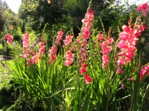 paradiesgarten-maag-herbst