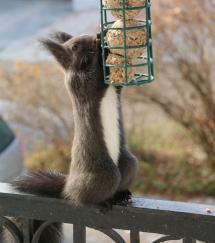 Eichhörnchen am Paradiesgarten