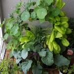 Balkon Hochbeet KUBI, Urban Gardening