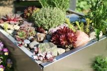KUBI mit Steinen und Sukkulenten, pflegeleichter Steingarten