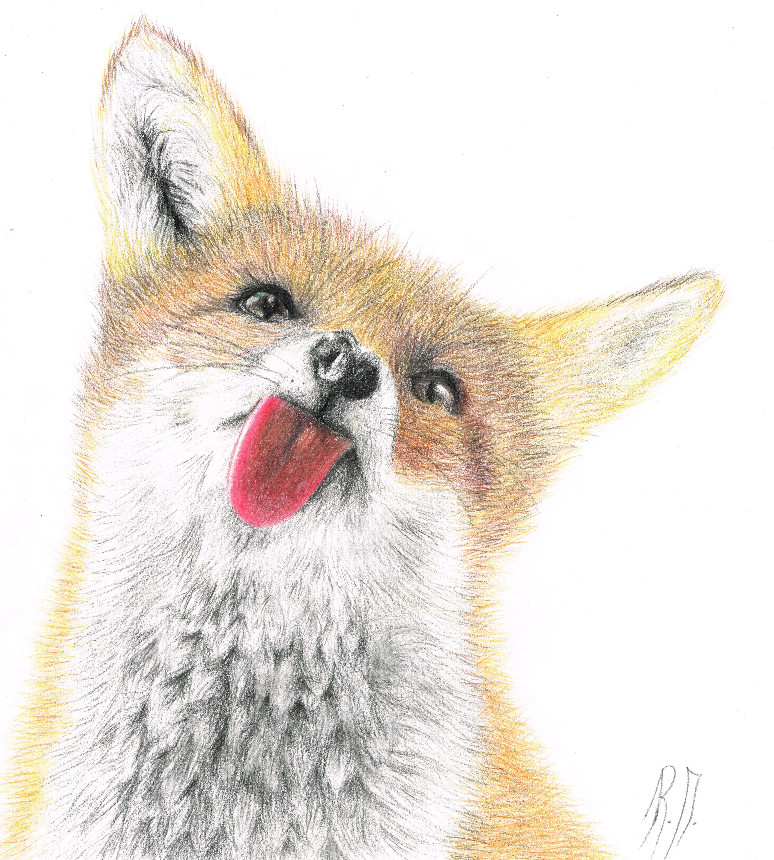 Gezeichneter Fuchs