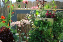 KUBI, Gemüse und Kräuter auf Terrasse anbauen