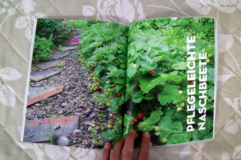 Obst & Gemüse mit Blumen kombinieren, Rhabarber in Kübeln und Beeten, Tomatenbeet mit Wärmewirkung