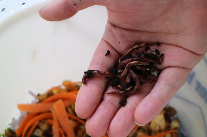 Kompostw Rmer kompostwürmer paradiesgarten maag